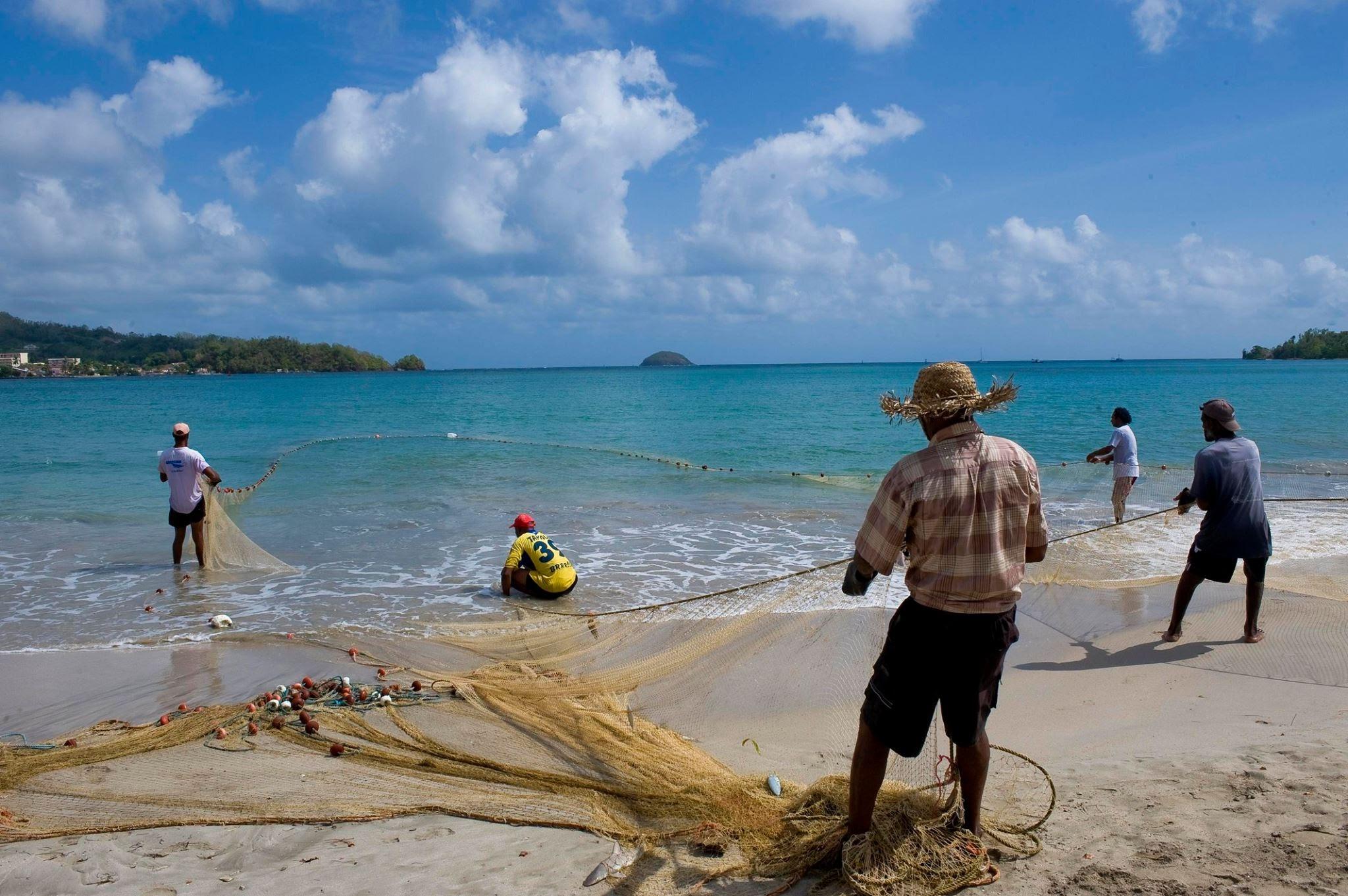 Pêche à la senne - Martinique