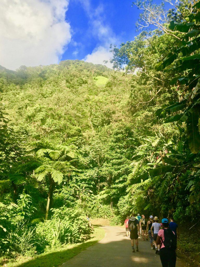 Randonnée Morne-Vert Martinique